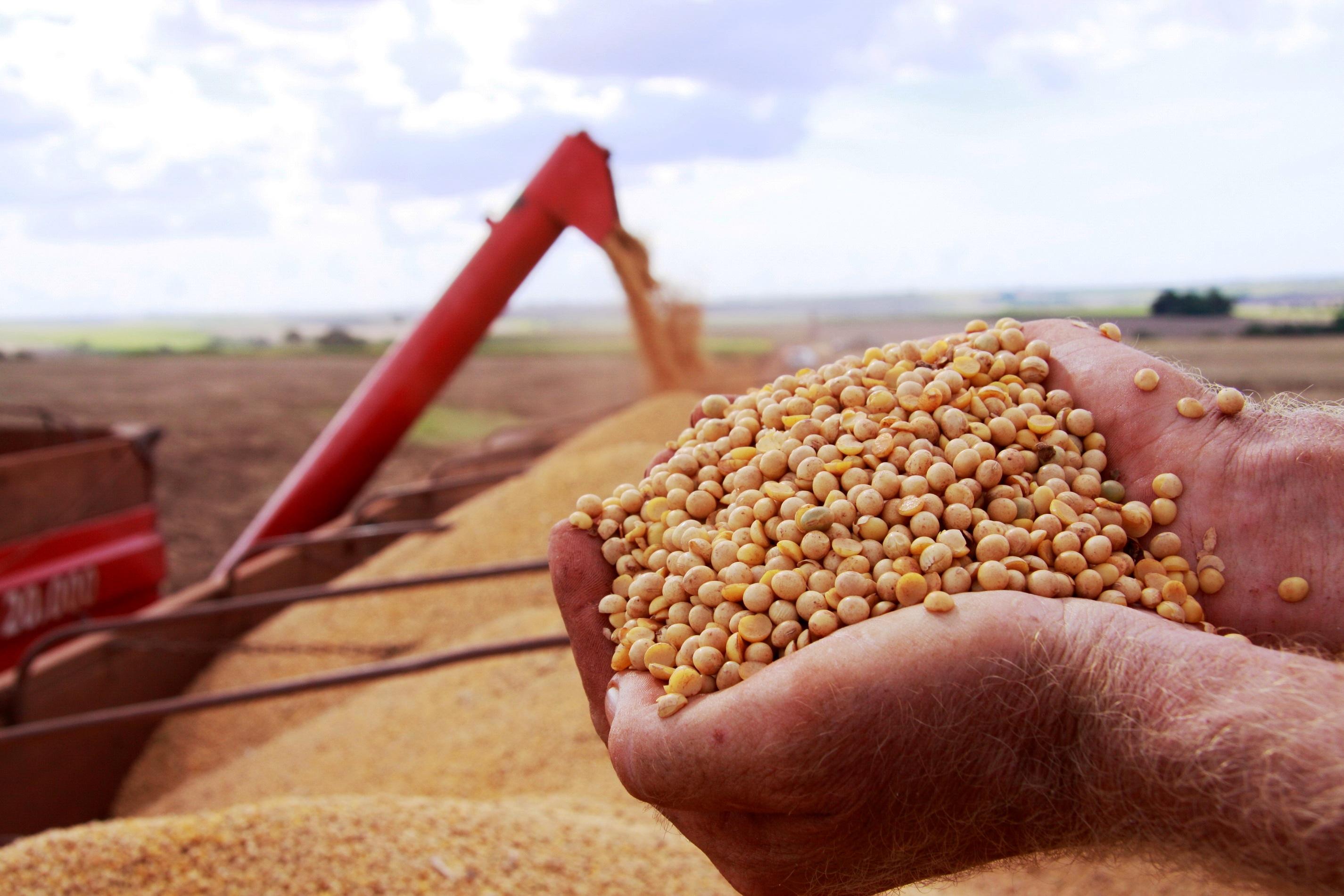 Testes em fazendas de Goiás comprovam que sojas de ciclo médio tiveram melhore resultados em ano de pouca chuva no estado
